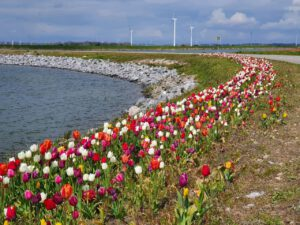 Tulpeneiland Zeewolde Flevoland